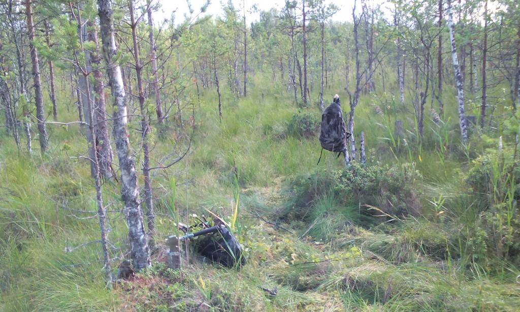 Choppin' birch
